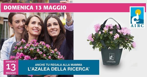 Torna l'Azalea della Ricerca di AIRC in 3.700 piazze italiane